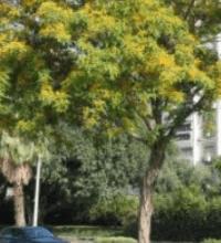 סקר עצים ואגרונום , מה זה אומר וכמה עולה